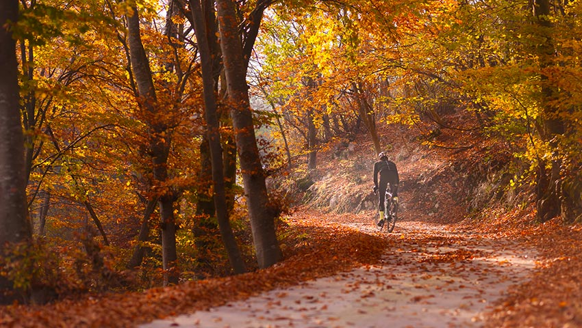 bike uphill on leaves